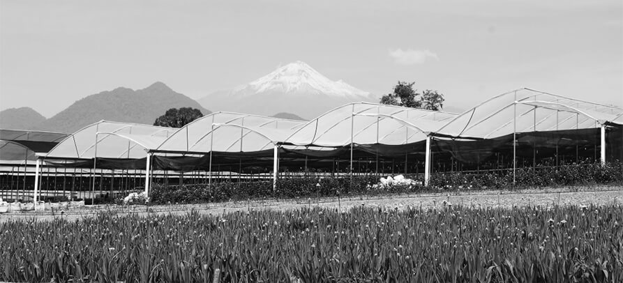 historia de chiltepec